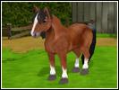 Скриншот игры - Мой Пони